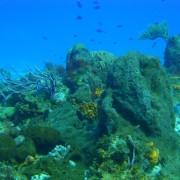Yucab, arrecife
