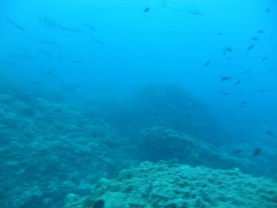 Inmersiones en Javea